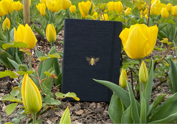 This is the Dingbats Pro Collection notebook stood up in the bark with yellow tulips in the background.