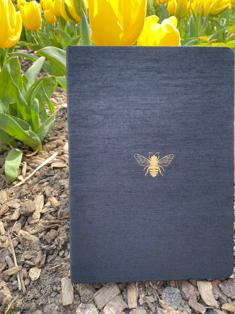 Dingbats Pro B5 notebook with a black fabric cover and a gold