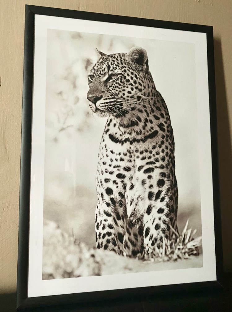 A poster in a black frame of a wild leopard.